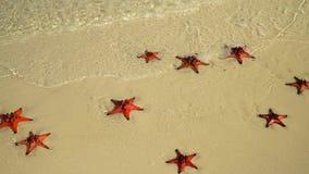 Primer si una estrella de mar roja que miente en la playa Arena blanca tropical con las estrellas de mar rojas en agua clara Moth almacen de video