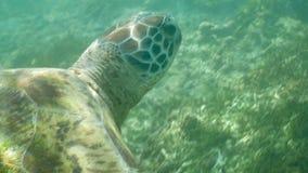 Primer subacuático 4k a cámara lenta de la tortuga metrajes