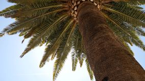 Primer superior de la palmera en fondo de la costa de mar almacen de video