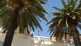Primer superior de la palmera en fondo de la costa de mar metrajes