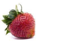 Primer tirado de fresas frescas Aislado en el fondo blanco Fotos de archivo libres de regalías