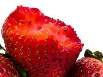 Primer tirado de fresas frescas Aislado en el fondo blanco Imagen de archivo libre de regalías