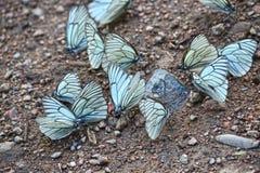 Primer tirado de una multitud de la mariposa Foto de archivo libre de regalías