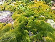 Primer verde del musgo en la montaña de HK fotos de archivo