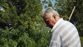 Primer, viejo hombre que desnuda la mala hierba en el jardín metrajes