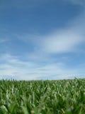 Primer y cielo de la hierba fotos de archivo