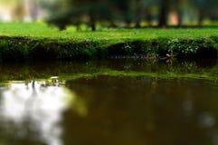 primer y orilla de la cala del parque del Inclinación-cambio con la hierba Fotografía de archivo libre de regalías
