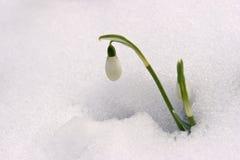 Primera flor Foto de archivo libre de regalías