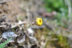 Primera flor del resorte Fotos de archivo