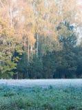 Primera helada en la hierba en el bosque Imágenes de archivo libres de regalías