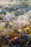 Primera helada en parque del otoño Mañana en noviembre Fotos de archivo libres de regalías