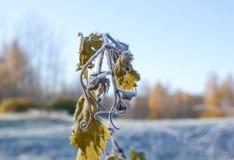 Primera helada en parque del otoño Mañana en noviembre Imágenes de archivo libres de regalías
