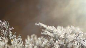 Primera helada, plantas en cristales de hielo metrajes