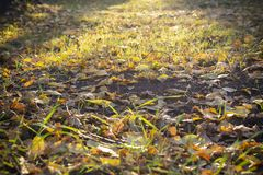 Primera hierba del resorte foto de archivo