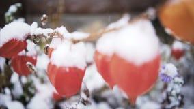 Primera nieve almacen de metraje de vídeo