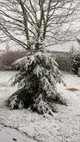 Primera nieve Fotos de archivo