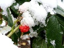 Primera nieve Fotos de archivo libres de regalías