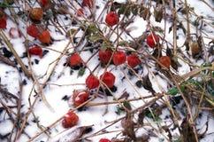 Primera nieve Imagen de archivo libre de regalías