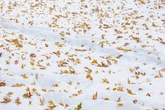 Primera nieve del otoño Fotografía de archivo