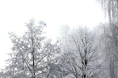 Primera nieve en árboles, paisaje horizontal aislado detallado grande del invierno Imagen de archivo