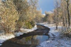 Primera nieve en bosque Fotografía de archivo