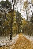 Primera nieve en bosque del otoño Imagen de archivo