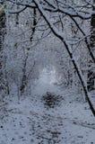 Primera nieve en el bosque Imagenes de archivo