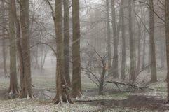 Primera nieve en el bosque Imagen de archivo libre de regalías