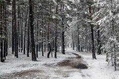 Primera nieve en el bosque Foto de archivo libre de regalías