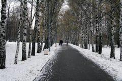 Primera nieve en el callejón del abedul del otoño Imagenes de archivo