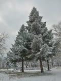 Primera nieve en el parque Imágenes de archivo libres de regalías