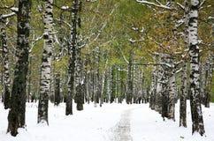 Primera nieve en el parque del otoño Fotografía de archivo