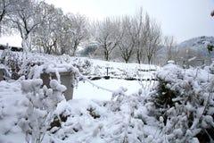 Primera nieve en jardín del tge Invierno del principio Foto de archivo libre de regalías
