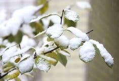 Primera nieve en las hojas verdes Fotografía de archivo libre de regalías
