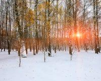 Primera nieve en los árboles nevados del bosque en la madera Imágenes de archivo libres de regalías