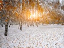 Primera nieve en los árboles nevados del bosque en la madera Imagen de archivo libre de regalías