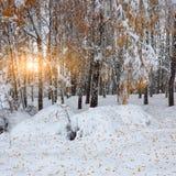 Primera nieve en los árboles nevados del bosque en la madera Foto de archivo