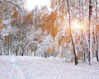 Primera nieve en los árboles nevados del bosque en la madera Fotos de archivo libres de regalías