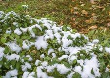 Primera nieve en otoño Imagen de archivo libre de regalías