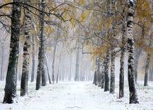 Primera nieve en parque de la ciudad del abedul Fotos de archivo libres de regalías