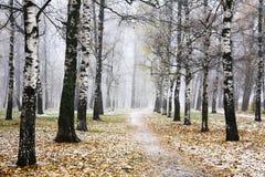 Primera nieve en parque de la ciudad del otoño Imagenes de archivo