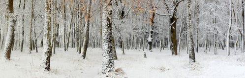 Primera nieve en un bosque Foto de archivo