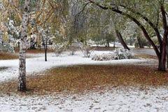 Primera nieve en un parque reservado de la ciudad Foto de archivo