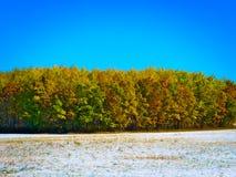 Primera nieve temprana del autum en prado por el bosque colorido imágenes de archivo libres de regalías