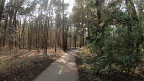 Primera opinión de la persona del paseo de la bicicleta a través del bosque el día soleado en los Países Bajos