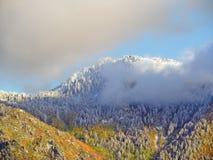 Primera polvoreda de la nieve Imagen de archivo libre de regalías