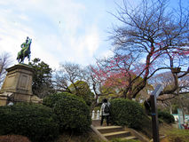 Primera primavera de Sakura en un poco en el parque de Ueno Imagenes de archivo