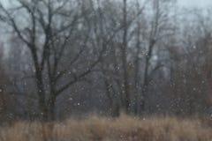 Primera ráfaga de nieve de la estación Imagen de archivo libre de regalías