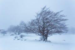 Primera tormenta de la nieve del año Fotografía de archivo