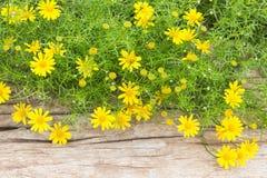 Primeras flores de la primavera Imagenes de archivo